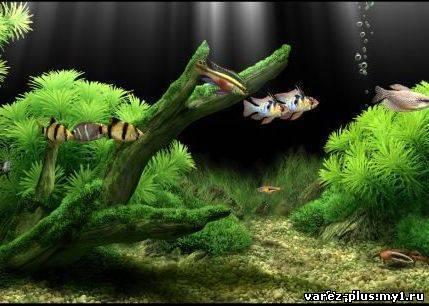 Dream Aquarium 1.0700 - качественный аквариум нового поколения